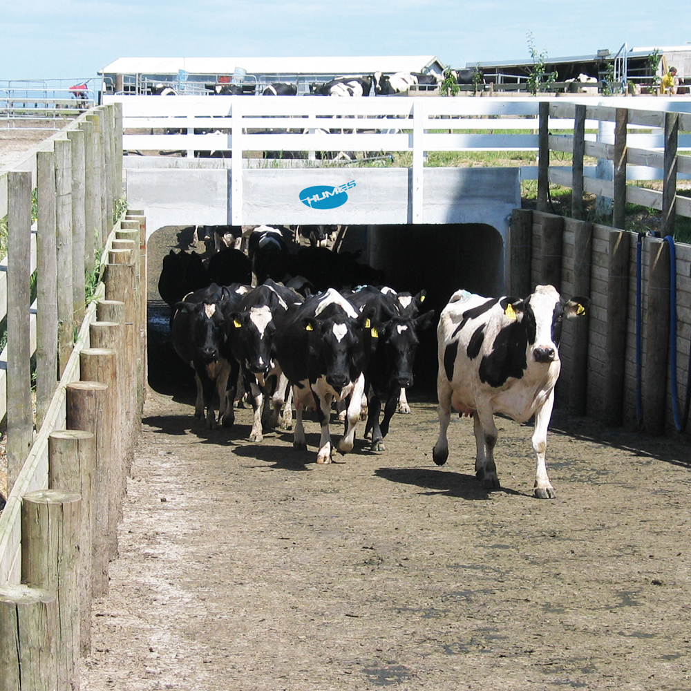 Humes Concrete Precast Rural Underpass for dairy cows